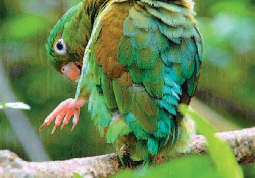Costa Rica, la côte caraïbe